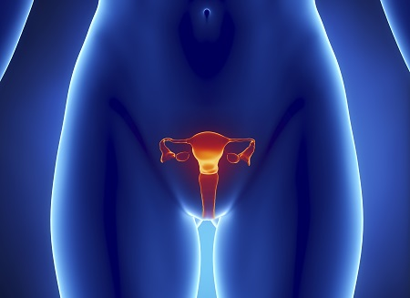 Anterior view of  uterus, fallopian tube, ovary, cervix.